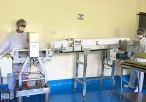 モリンガ茶の生産農園/工場4