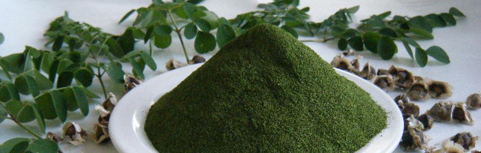 モリンガ茶 粉末